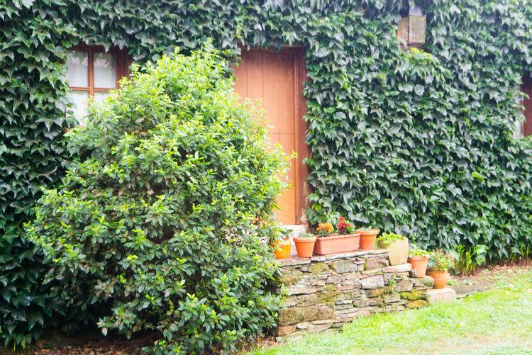 Door Rural Outdoors Architecture Green Color Green