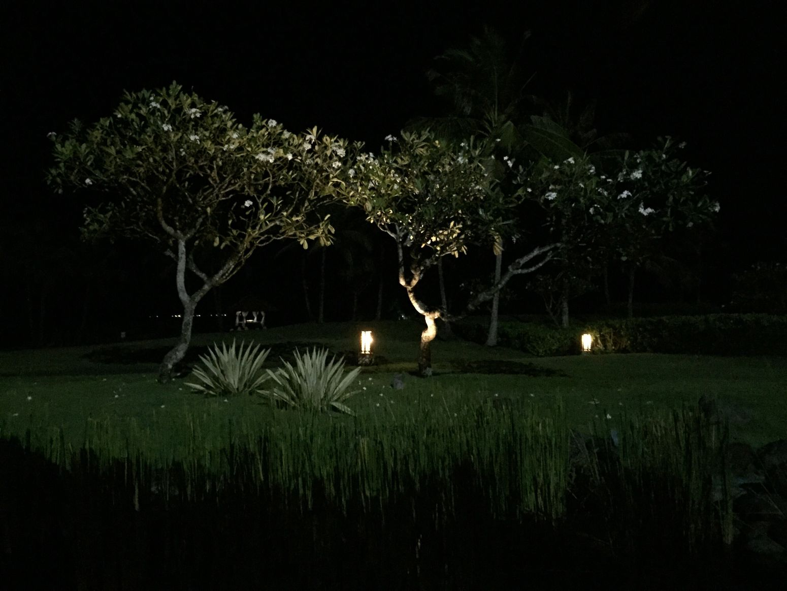 IPhoneography Gentle Lights Tree Night Landscape Outdoors No People Dark Tranquility Bali Beauty In Nature Unedited Photo Tranquil Scene