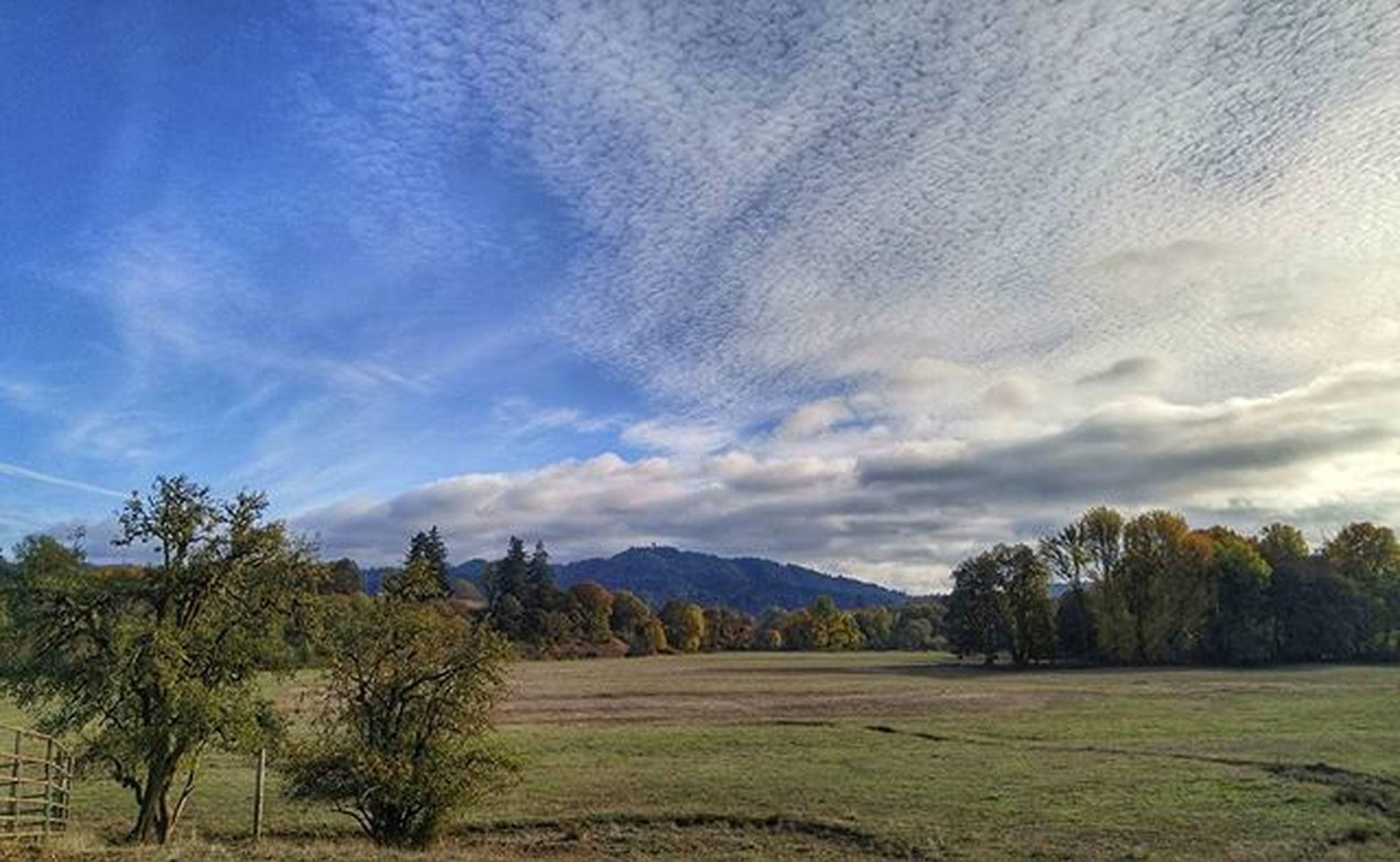 Another beautiful scene in Oaklandor Landscape Fall Autumn Beauty Fallcolors Farm Rural_love_october