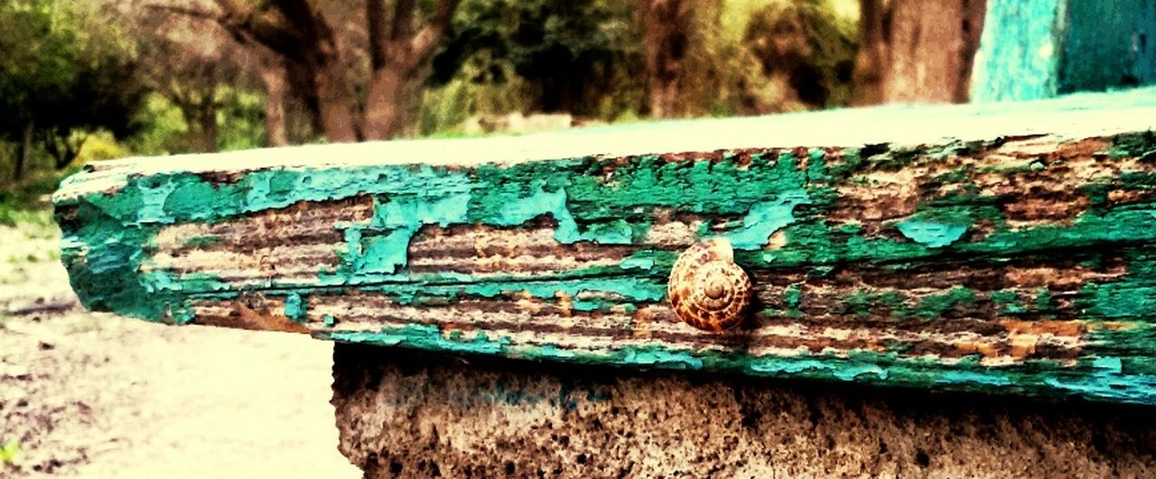 You Won't Wake A Snail Up From  Its  Slumbered Ignorance Che Fontana Phoneography