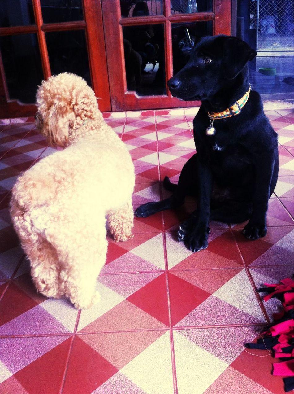 My lovely friends. Mydog