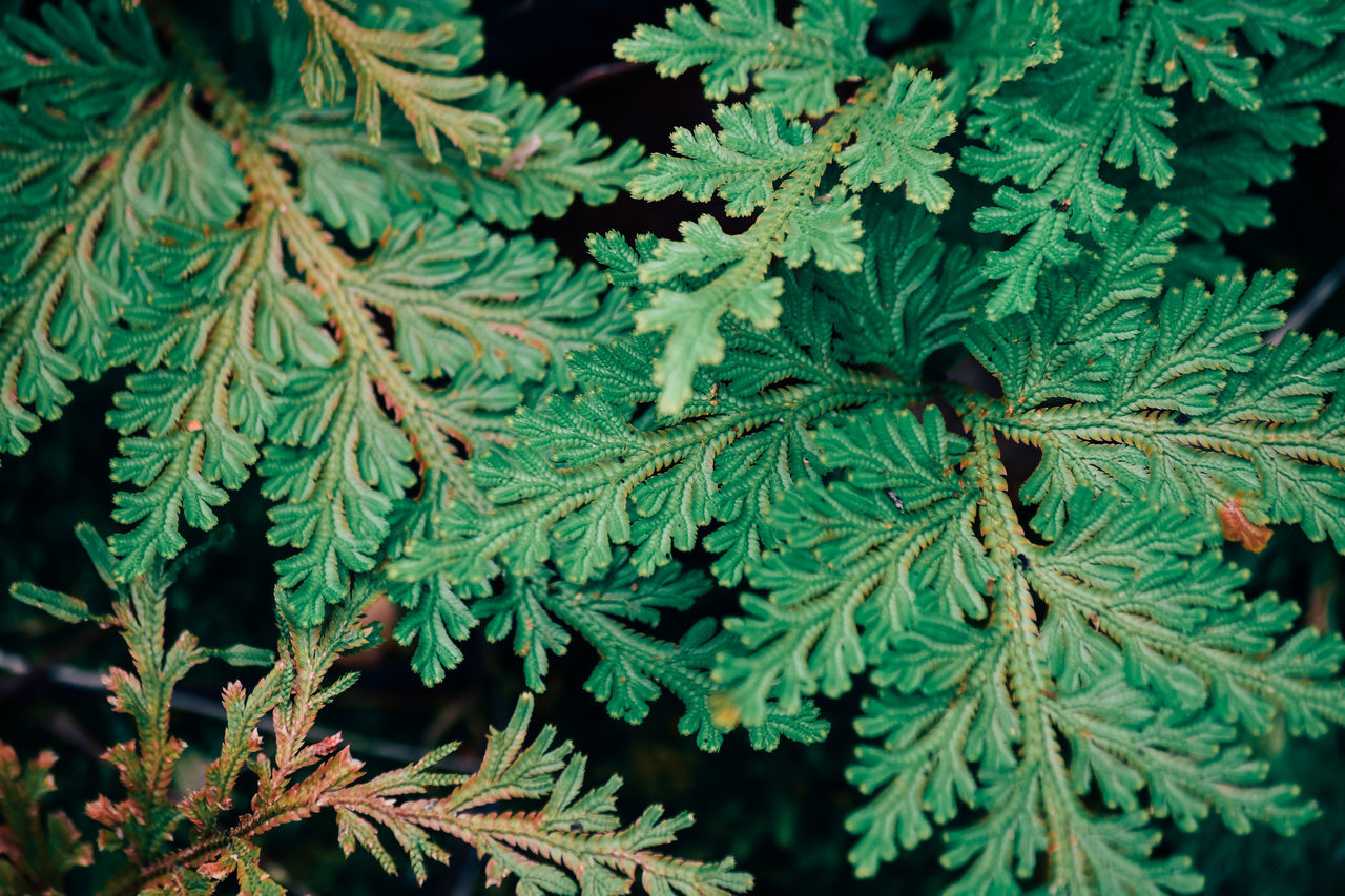 Beauty In Nature Botanical Botany Branch Cannabis Plant Close-up Design EyeEmNewHere Foliage Forest Fragility Fresh Garden Green Color Growth Leaf Nature Outdoors Plant Spa Spring Textured  Tree Vintage Water