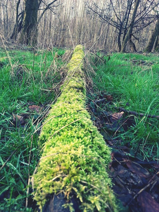 Showcase: February Nature Wald Trees Mossy Tree Forest Stadtnatur