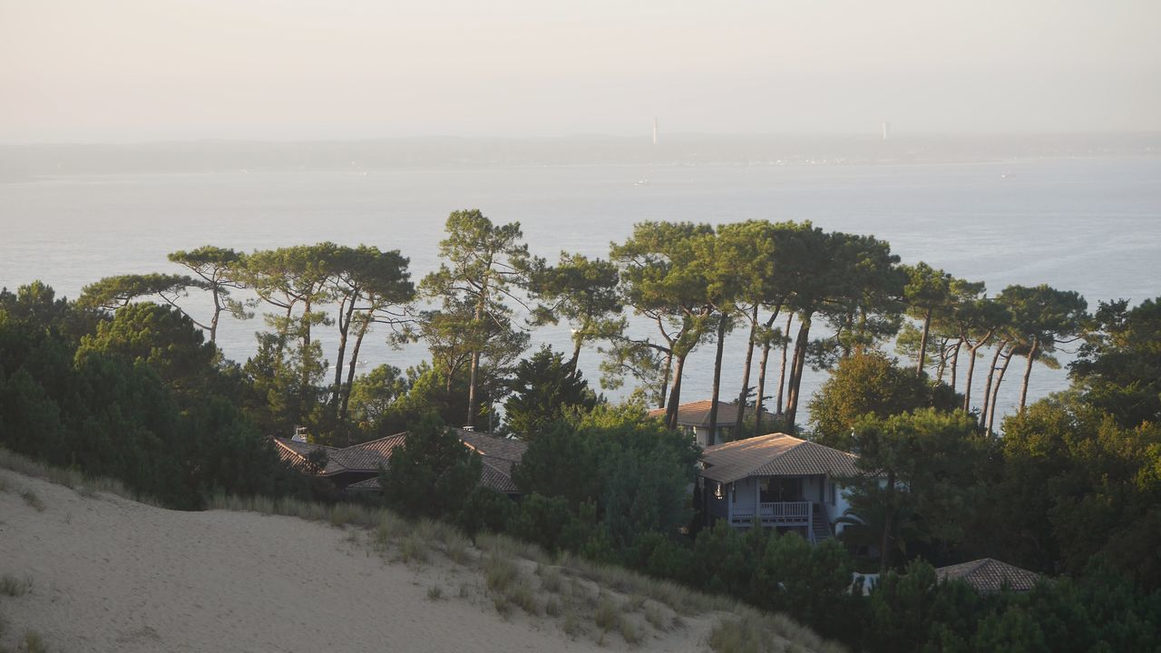 Dune Du Pyla Nature Tree Water Built Structure Beauty In Nature Nature_collection Naturelovers Nature Dune Du Pilat Beauty In Nature Sand Dune Sky Naturephotography Landscape Sand Bassin D Arcachon Sea Bassin D'Arcachon Nature Photography Tree Forest Green Color Seascape Sea Front