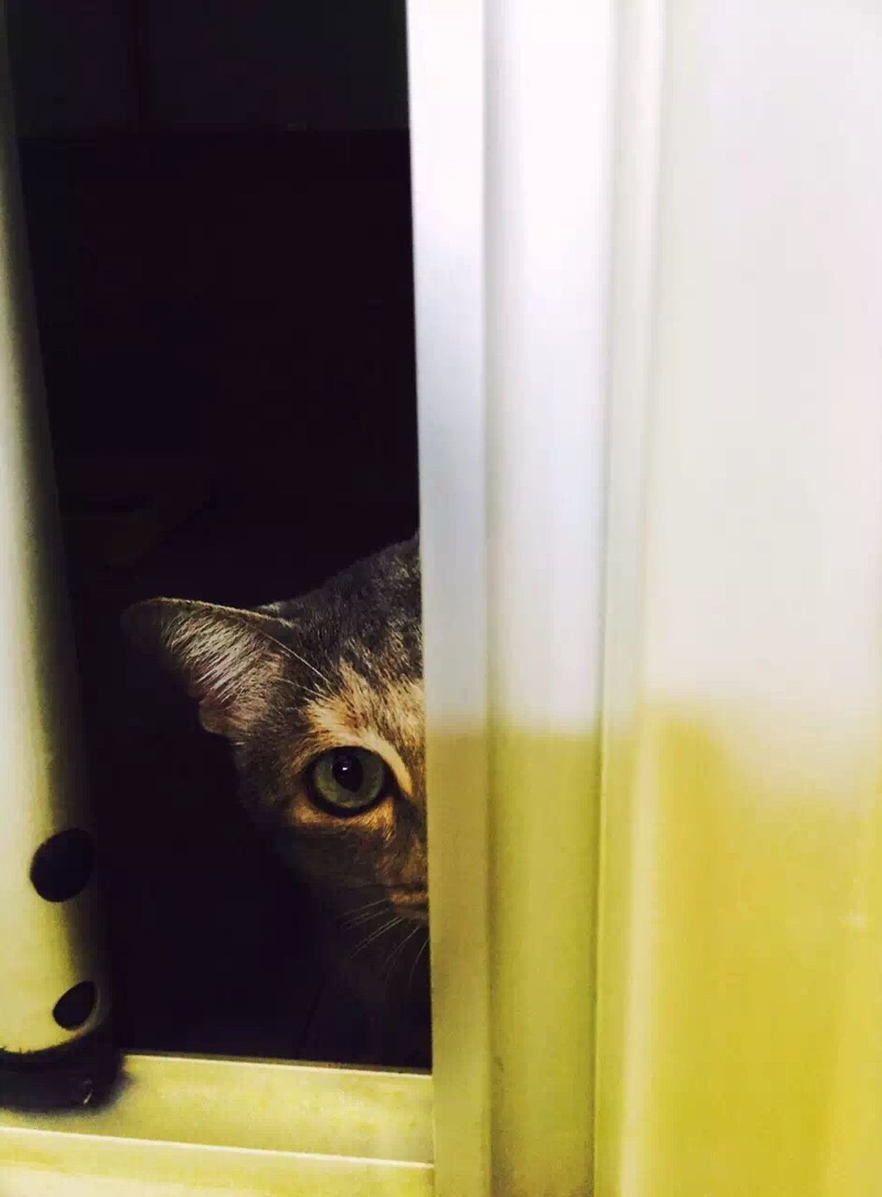 Looking At Camera Pets Peeking Domestic Cat Portrait One Animal Domestic Animals Indoors  Window Curtain Animal Eye Animal Themes Watching No People Feline Mammal Close-up Cage Security Bar Day Hiddi G Eye EyeEmNewHere Uniqueness