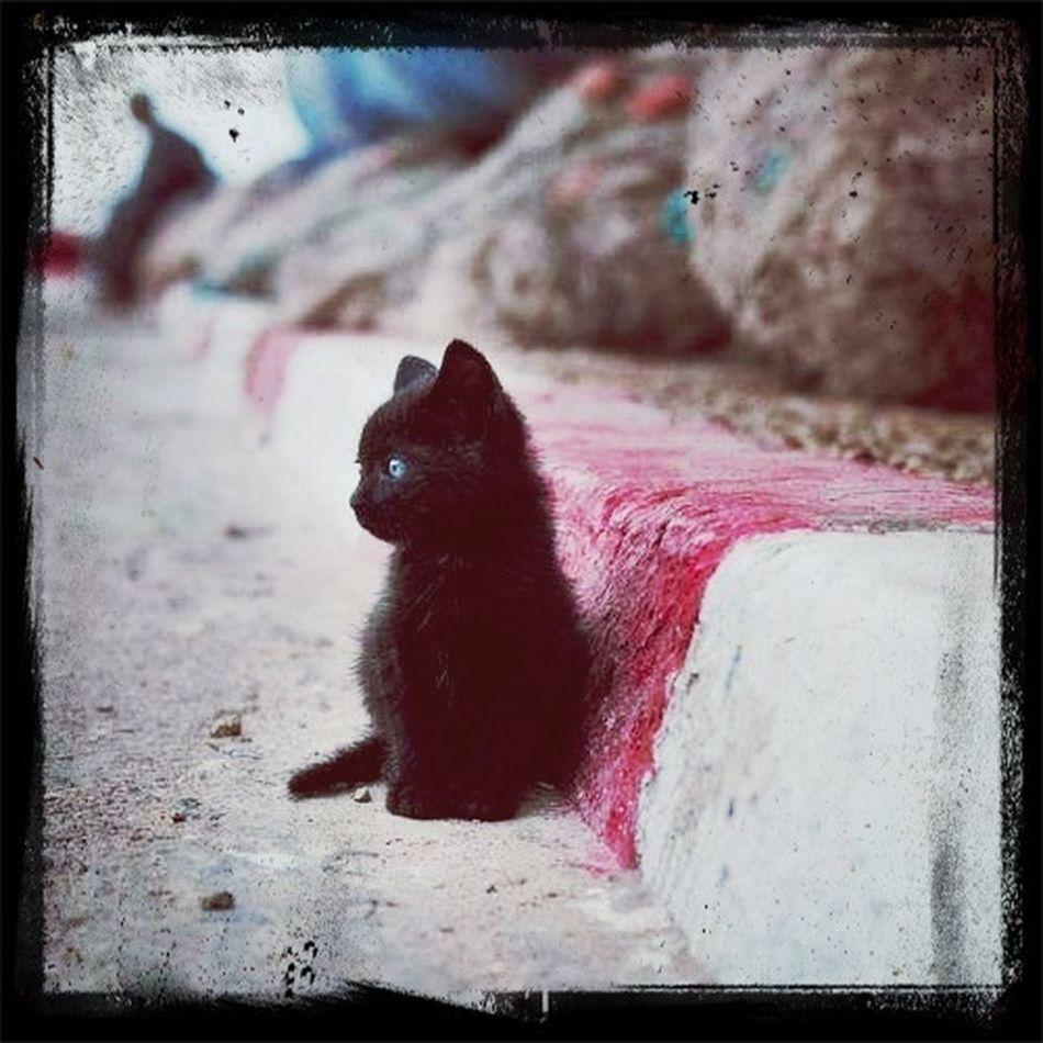 cat I'm Alone Again