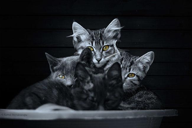 My little kitties :) Black & White Cats Kitty Taking Photos