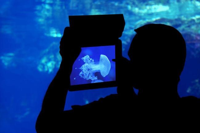 Man photographing a jellyfish with tablet in the aquarium Animals Aquarium Aquarium Life Beauty In Nature Blue Dark Fauna Fish Focus On Foreground Genova Human Meets Technology Jellyfish Man Medusa Nature Ocean Outdoors Photographer Sea Silhouette Smartphone Smartphone Photography Tablet Technology Underwater