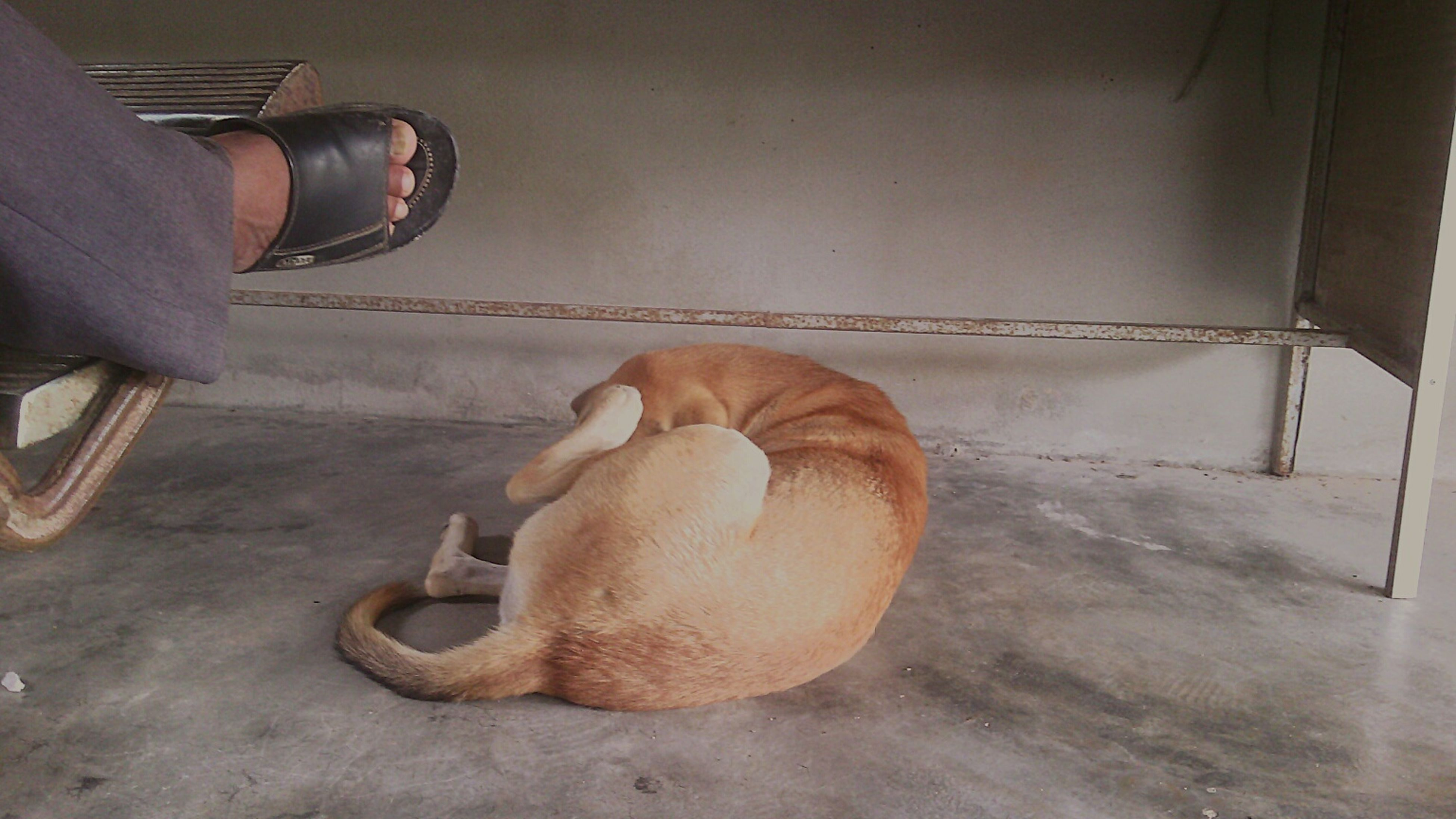 indoors, domestic animals, one animal, dog, animal themes, relaxation, mammal, pets, low section, sitting, home interior, lying down, part of, sleeping, cropped, sunlight, high angle view, day