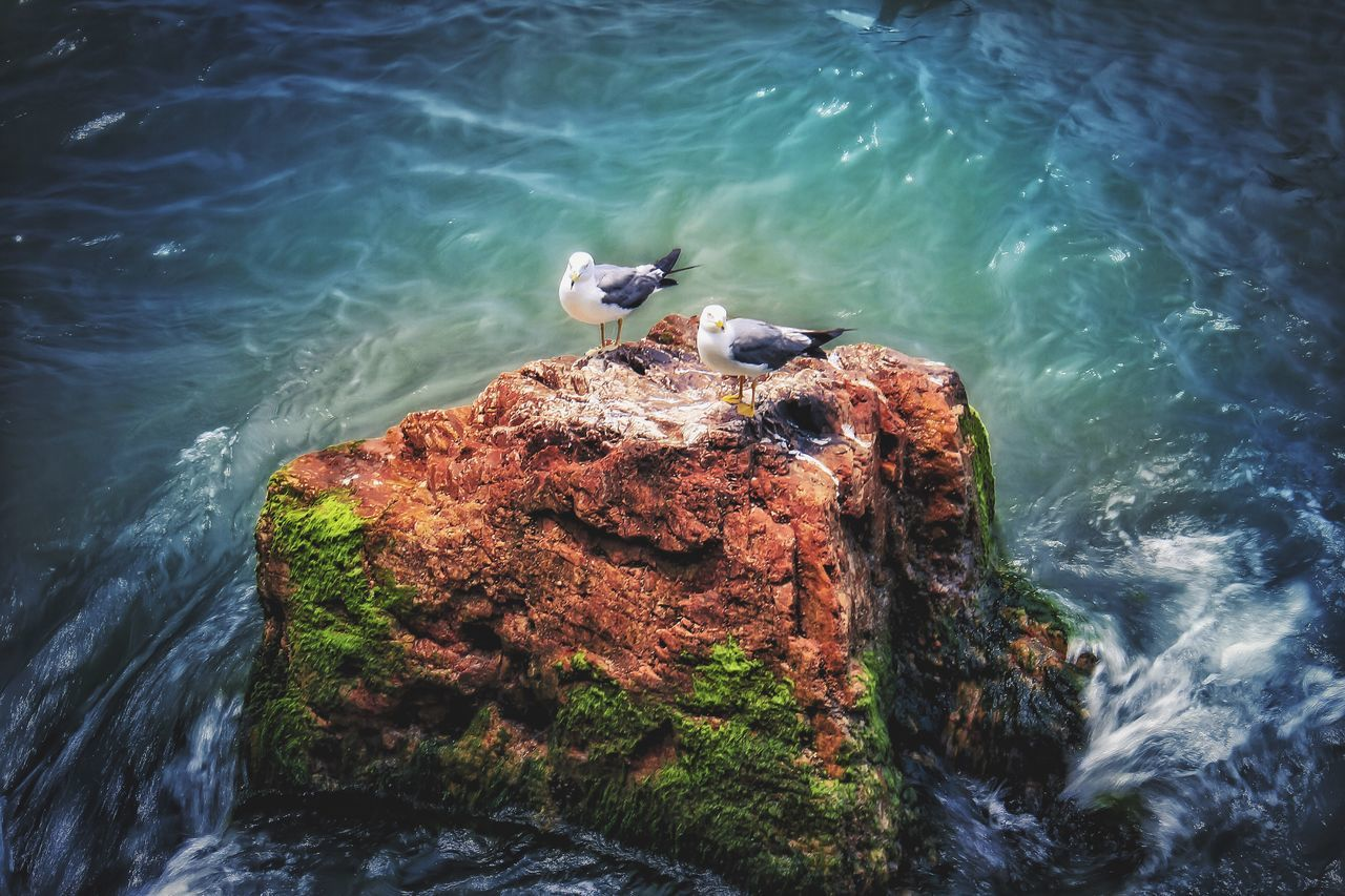 animals in the wild, animal themes, bird, water, animal wildlife, one animal, high angle view, perching, sea, rock - object, no people, day, nature, outdoors