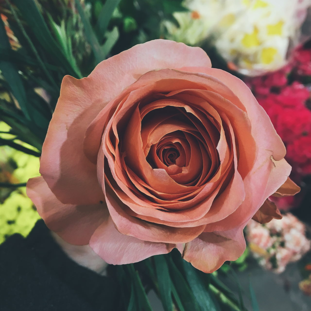 flower, petal, rose - flower, nature, fragility, flower head, beauty in nature, freshness, growth, plant, close-up, no people, outdoors, blooming, day