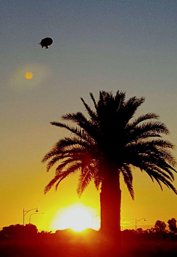 Moon at sunset Moon At Sunset Sunset Palm Tree Orange Gold Silhouette Tranquil Scene Orange Color Palm Tree