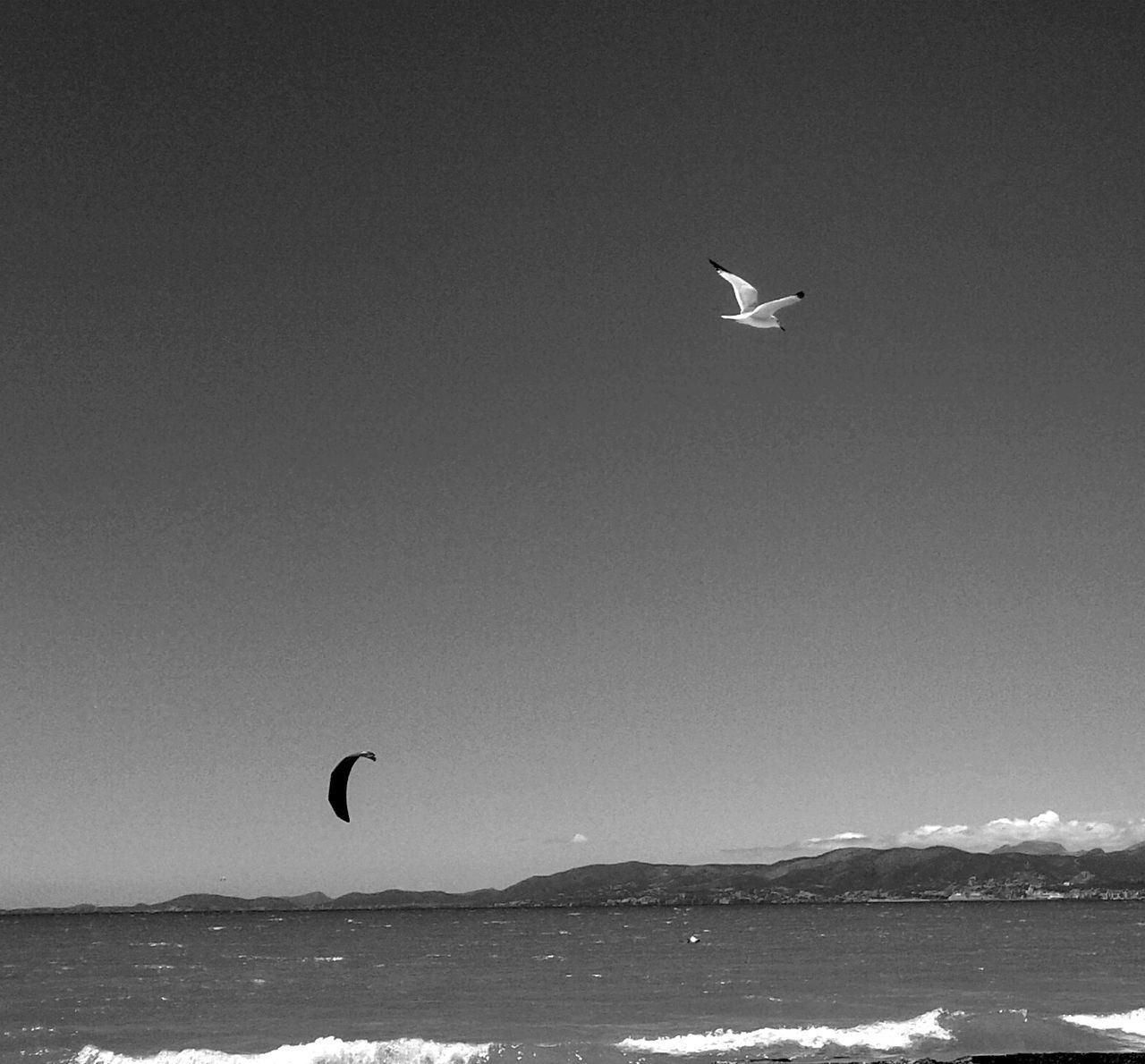Kite And Bird Flying Over Sea