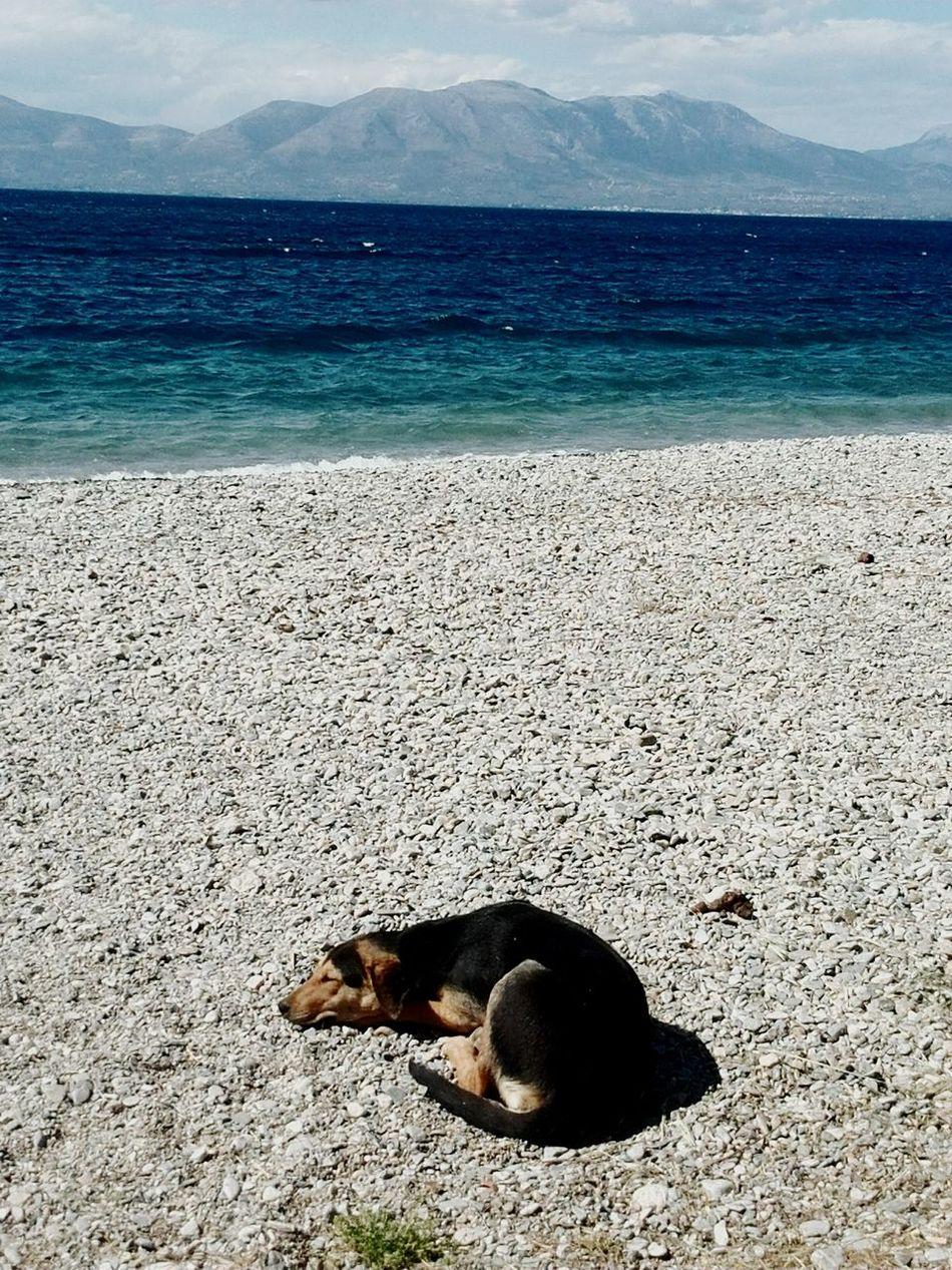 Taking Photos Endlesssummer Enjoying The Sun Dogslife Dogoftheday Dog Enjoys A Rest Sea And Sky Sunset #sun #clouds #skylovers #sky #nature #beautifulinnature #naturalbeauty #photography #landscape