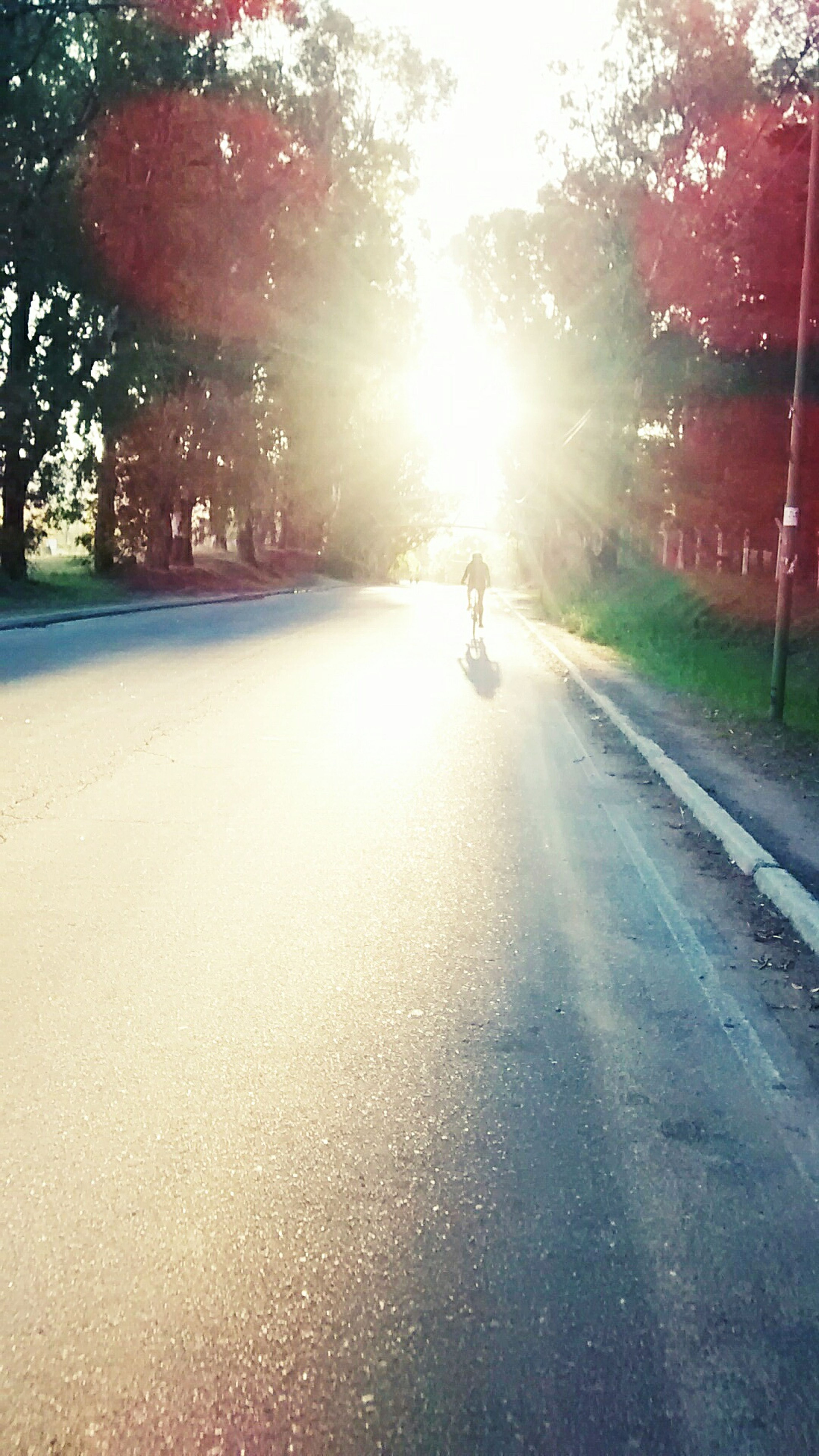 Walk Bike Sunset Friend