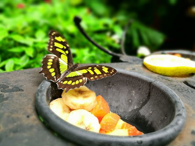 Butterfly Focus On Foreground Nature Green Adrianureña
