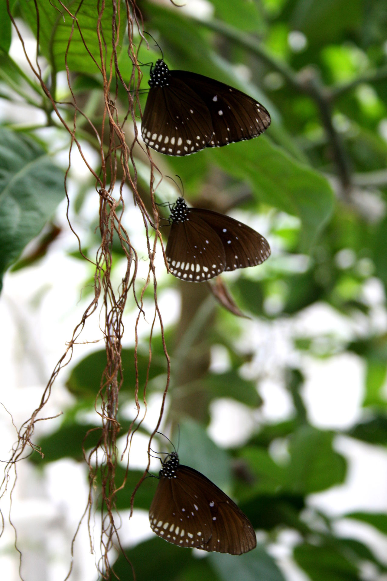 Animal Behavior Animal Themes Beauty In Nature Butterflies Butterfly - Insect Canon Check This Out Day EyeEm Nature Lover Focus On Foreground Fragility Hanging Around Hello World Insect Luisenpark Mannheim Nature No People Plant Taking Photos