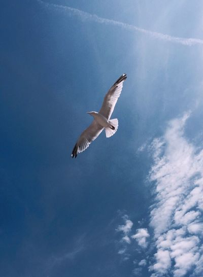 Beach Bird Sky Sunny Day IPhoneography EyeEm Nature Lover