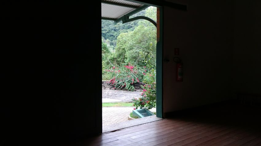 Day Domestic Room Door Doorway Flower Growth Home Interior Indoors  Mathilde Nature No People Open Open Door Plant Tree Window