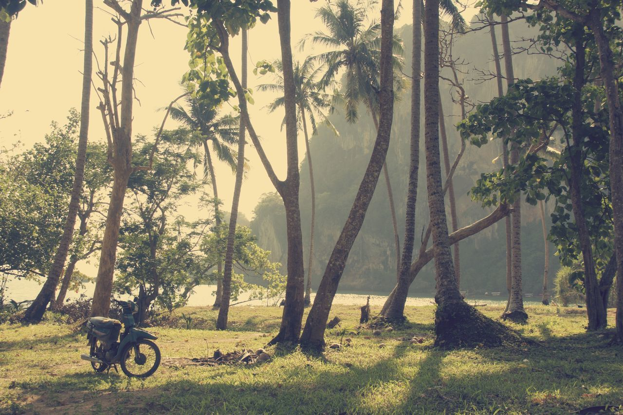 Day Fog Grass Islandlife Landscape Motorcycle Photography Nature No People Outdoors Palmtreees Palmtrees Paradise Plant Postcardsfromtheworld Tree Tree Trunk