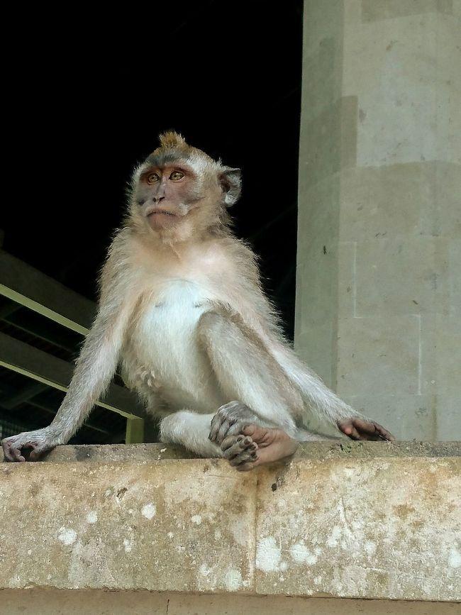 One AnimalMonkeyForest Monkey Ubud Bali Animal Poses Just For Me Lonely Monkey Travel Holidays 😚 ☀