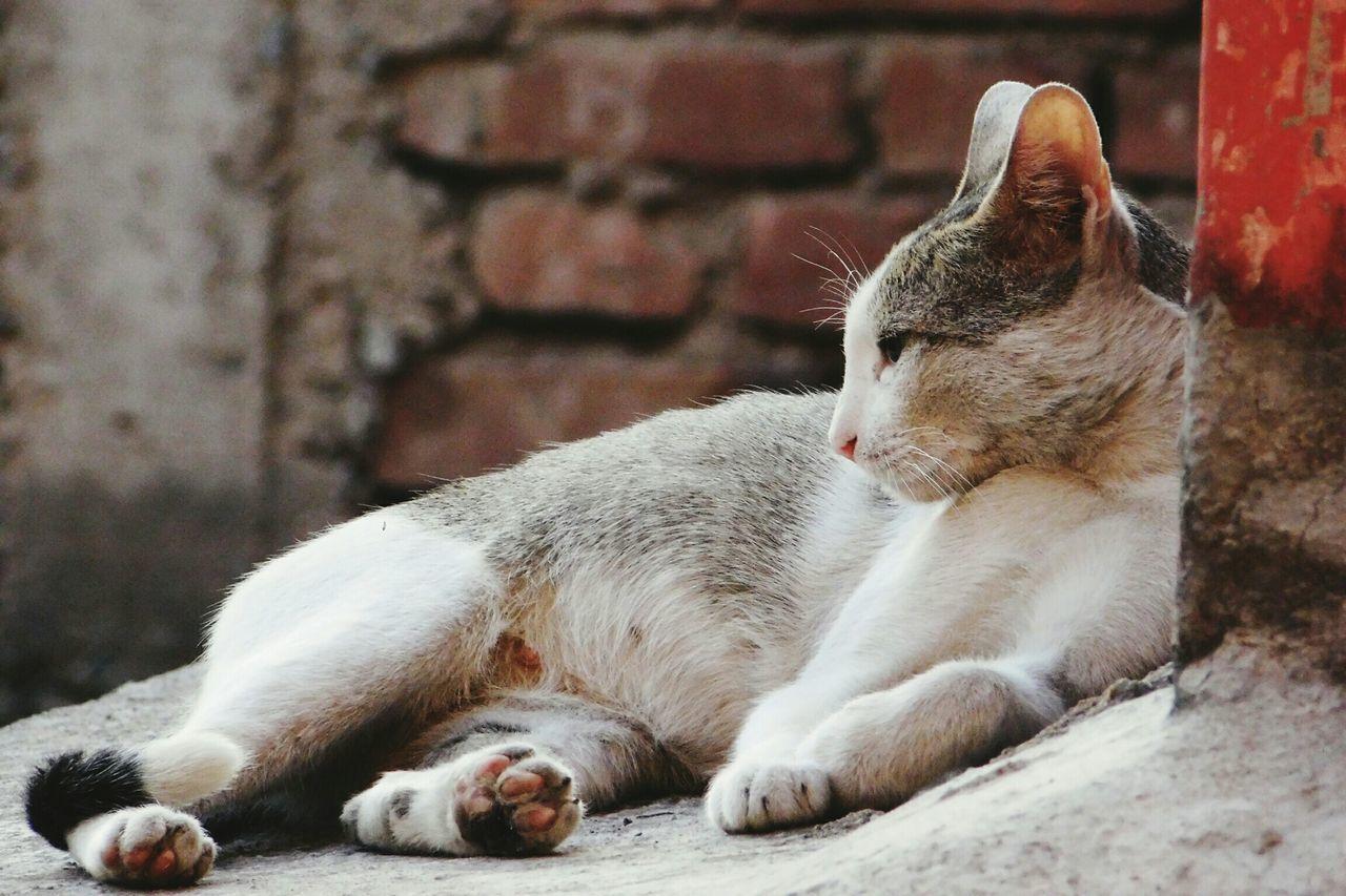 Stray Cat Resting On Street