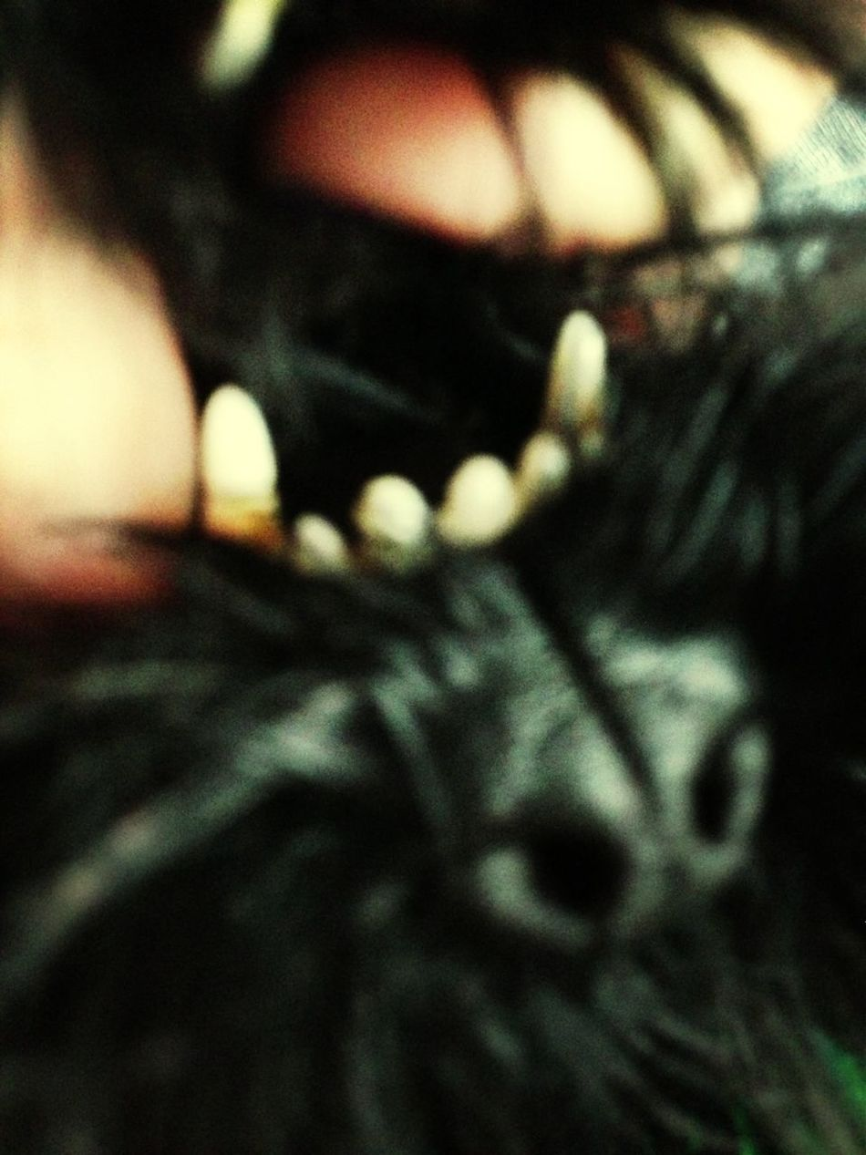 My Dog Has Some Fierce Teeth