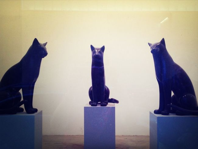 Three Onyx Cat