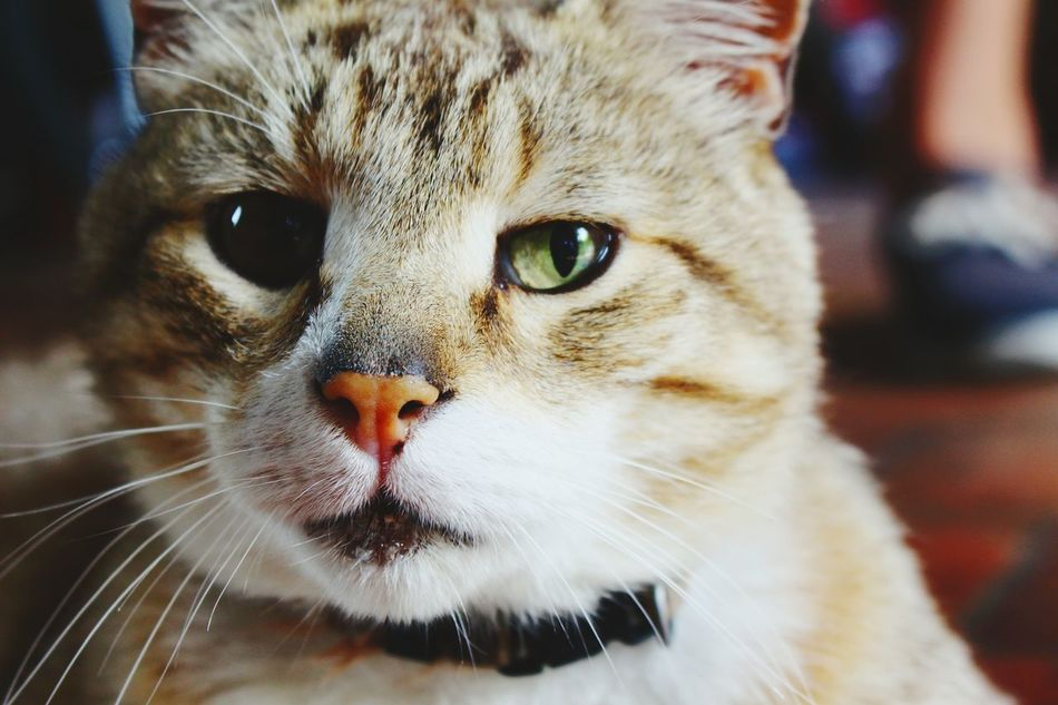 Cat Animal_collection Beautiful Animals  Green Eyes Bretagne Think I Like Cute Pets Portrait Of A Cat Best EyeEm Shot