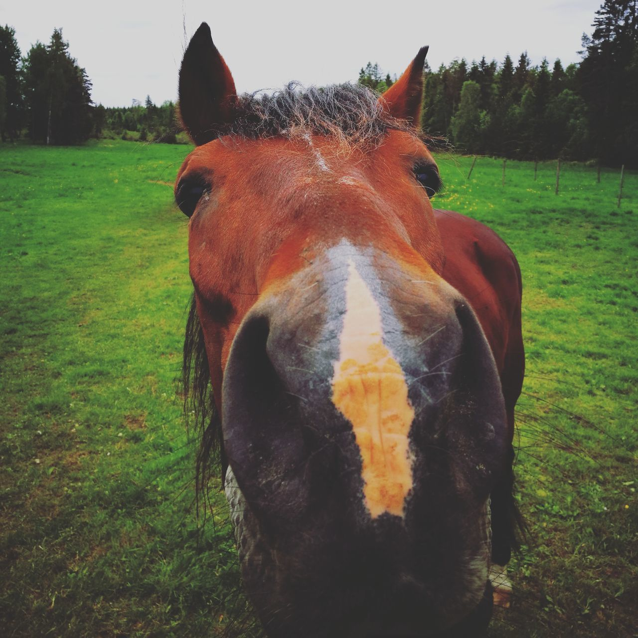 One Animal Domestic Animals Mammal Field Animal Themes Agriculture Horse Close-up