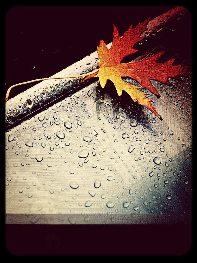 Fall...