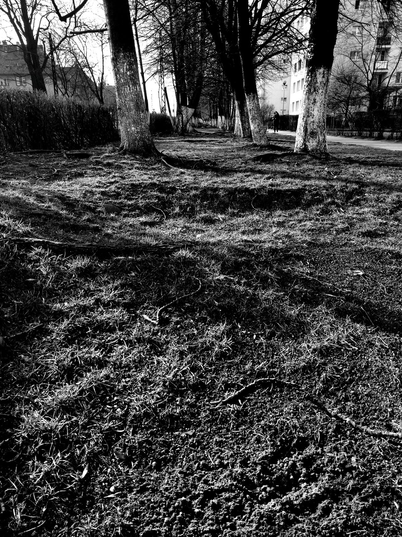 Grass Lawn Trees Vanishing Point Hedge Live Fence Light And Shadow Light Shadow Walking Around Black And White Black & White Moto X Play Wasiak