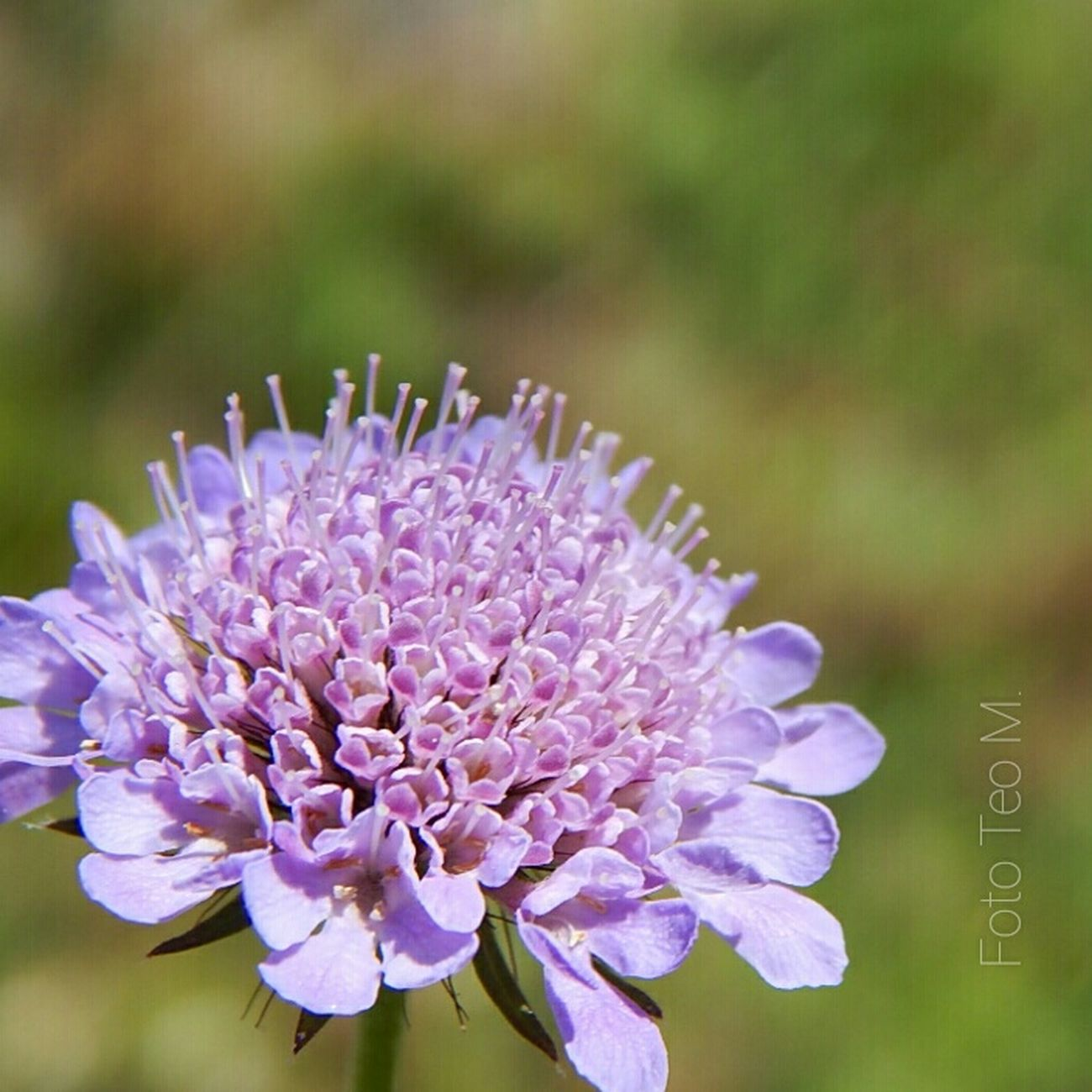 Flowers Flower EyeEm Nature Lover Nature Nature Photography Serbia Makro Photo EyeEm Gallery Violeta Eye4photography  EyeEm Best Shots Picture