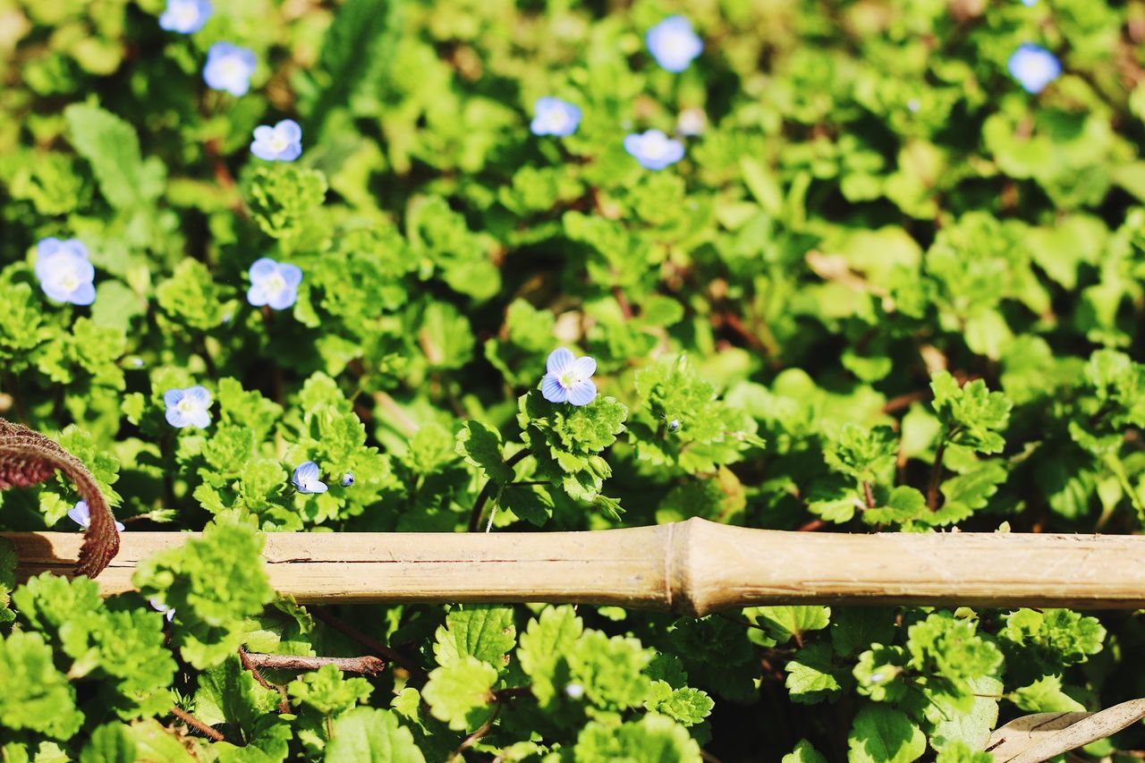 Speedwell Flower Nature Beauty In Nature Growth Plant Fragility Freshness From My Point Of View EyeEmNewHere EyeEm Gallery Wildlife & Nature Spring Peace And Quiet Low Angle View Freshness Beauty In Nature Focus On Foreground No People Outdoors Blooming Day Flower Head Close-up Animal Themes