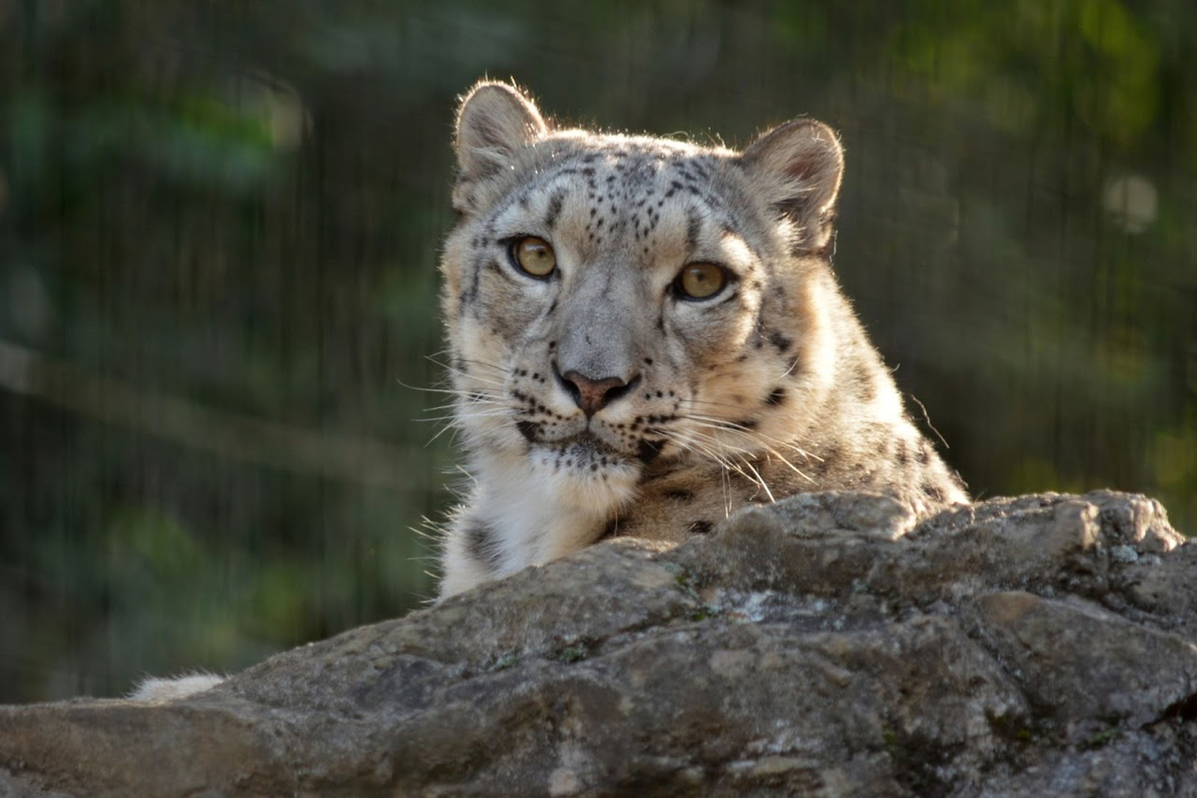 animal themes, animals in the wild, one animal, wildlife, focus on foreground, mammal, close-up, forest, nature, animal head, day, outdoors, safari animals, no people, squirrel, rock - object, portrait, zoo, zoology, side view