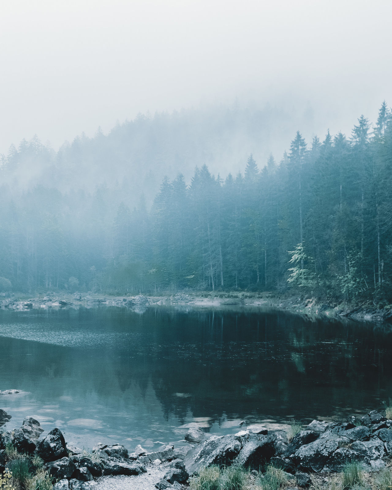 Moody lake morning Beauty In Nature Day Fog Forest Lake Landscape Mountain Natural Parkland Nature No People Outdoors Pine Woodland Reflection Scenics Sky Social Issues Tourism Travel Tree Water