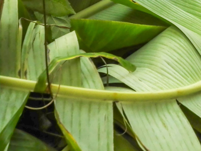 Beauty In Nature Close-up Day Food Food And Drink Freshness Green Color Growth Healthy Eating Leaf Nature No People Outdoors Vegetable