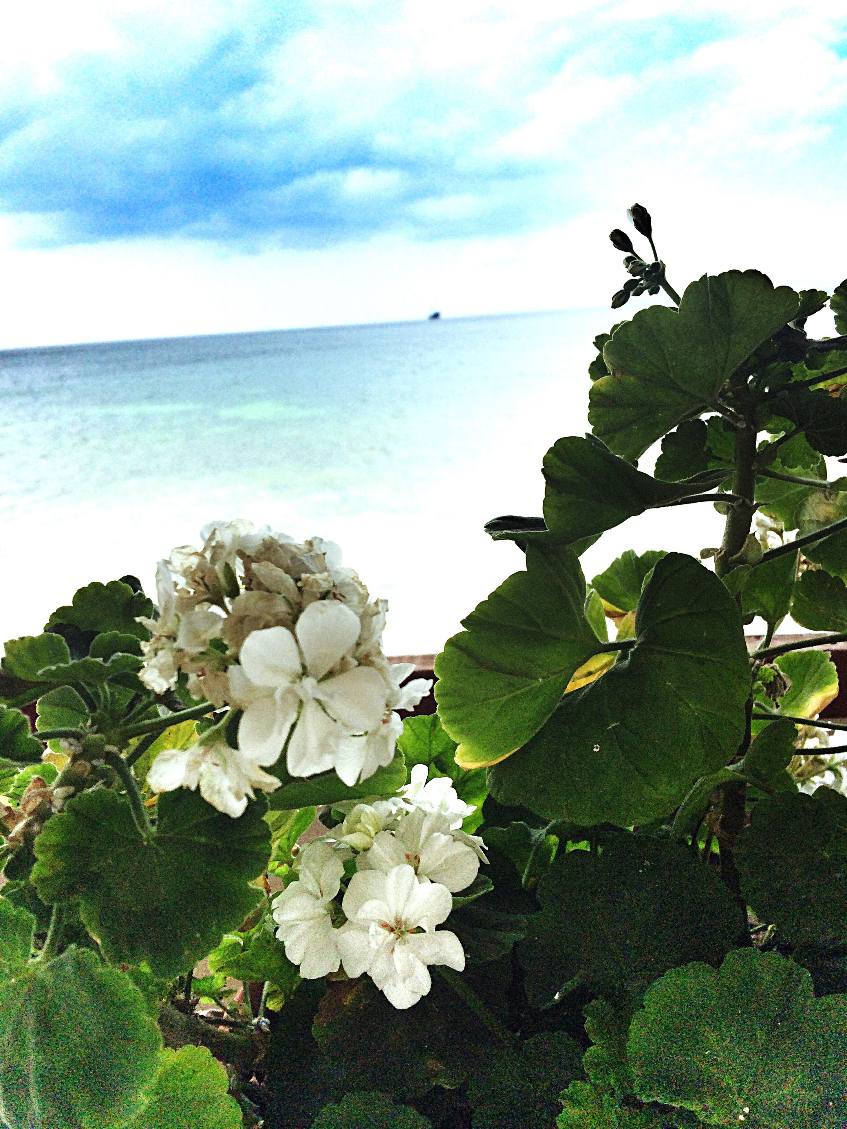 sea, horizon over water, water, flower, beauty in nature, tranquil scene, scenics, tranquility, fragility, sky, petal, nature, rock - object, shore, cloud - sky, cloud, bunch of flowers, non-urban scene, rocky, day, outdoors, tourism, in bloom, freshness, vacations, no people, flower head, remote, rock formation