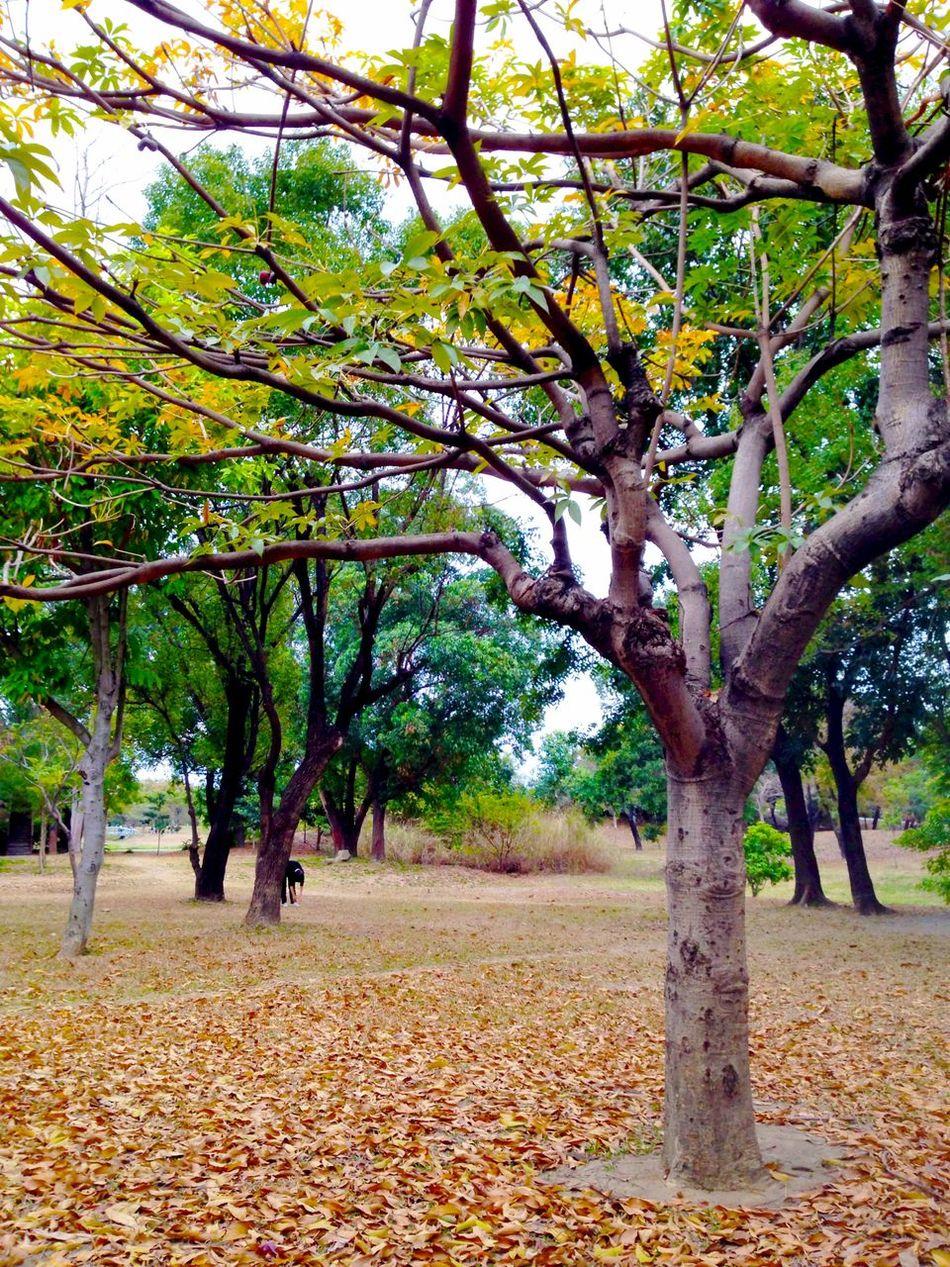 Trees Defoliation Park
