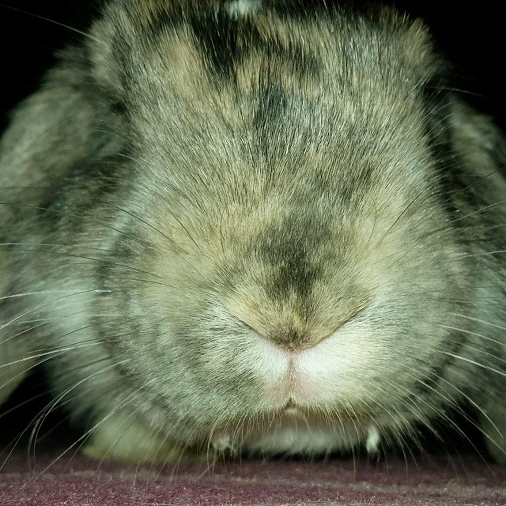 Aries Cucciolo Musettodolce Bunnystagram Istagram Istaphoto Funny Coniglietto Dolcezzainfinita Cicciolo Sultappetoconte Nano Tagsforlike Bologna Casiná