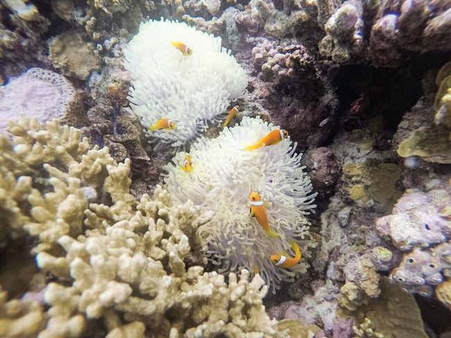 Under the sea... ☺️ Clownfish Underthesea Snorkeling First Eyeem Photo Nature Photo Photography Travel