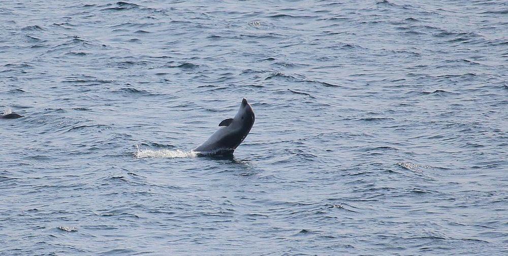 Animal Sea Life Animal WildlifeTaking Photos Popular Photos Popular Nature Animals In The Wild Motion Water Water Dolphins Freedom Freeway