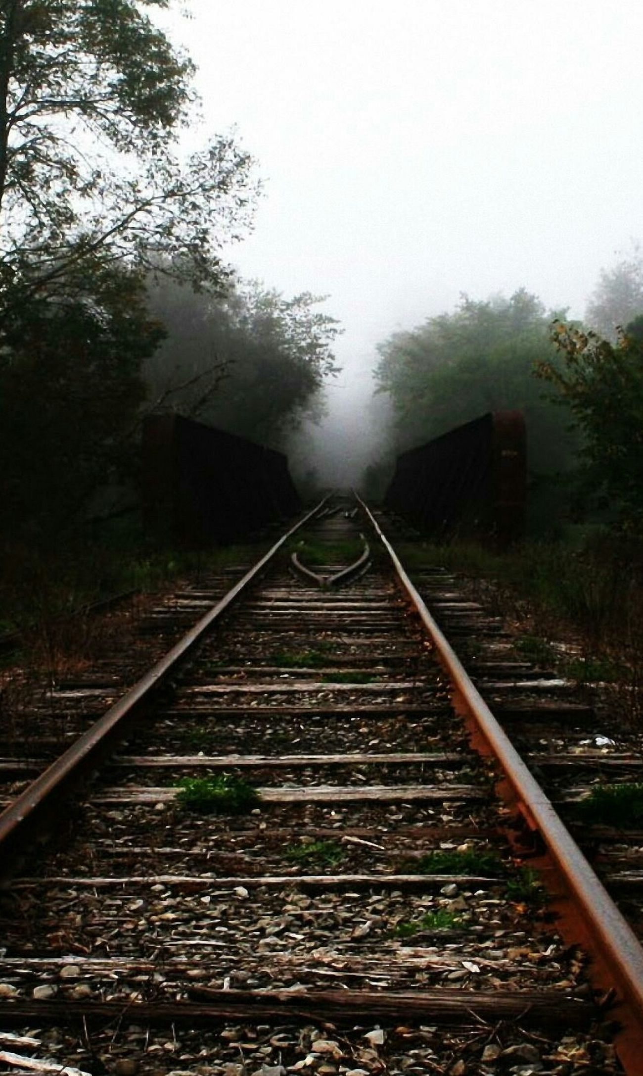 Railroad Track Fog Tree Rail Transportation Nature Outdoors Sky No People Day Train_of_our_world Friday