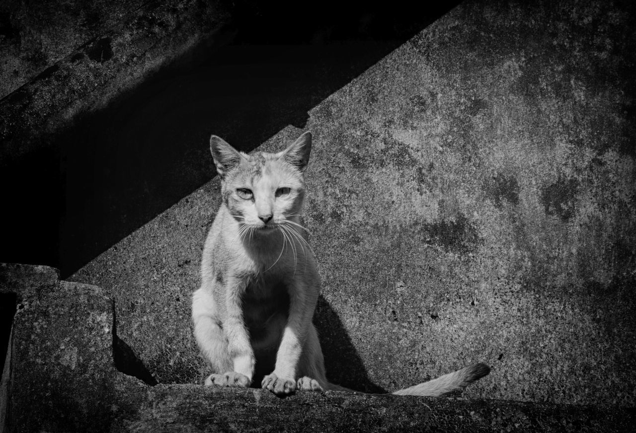 Street Cat sitting in front of my lens Animal Themes Black And White Blackandwhite Cats Cats Of EyeEm Day Domestic Animals Domestic Cat Feline Full Length Looking At Camera Mammal Monochrome No People One Animal Outdoors Pets Portrait Shvm8961 Sitting