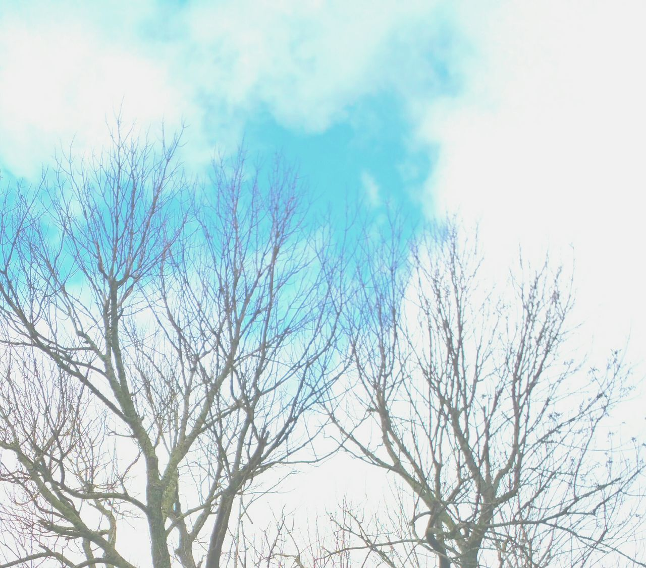 low angle view, sky, bare tree, outdoors, nature, day, no people, beauty in nature, tree, cloud - sky, branch, scenics, bird
