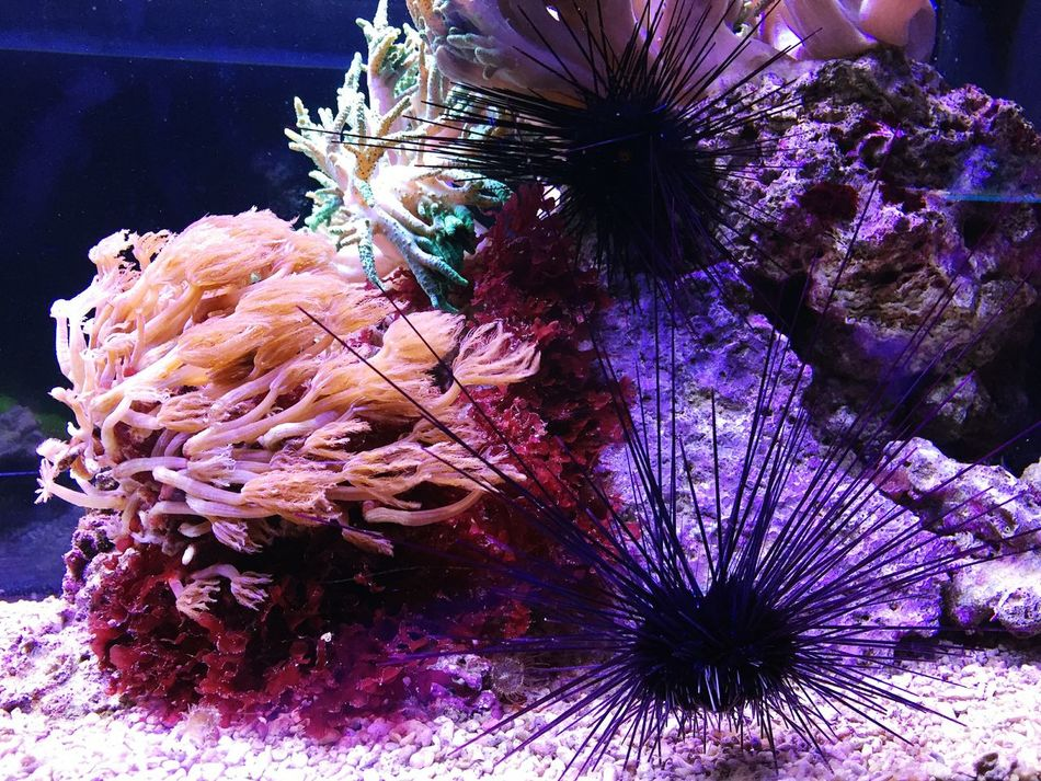 Growth Nature Tree No People Close-up Outdoors Day Underwater UnderSea Coral Multicolor