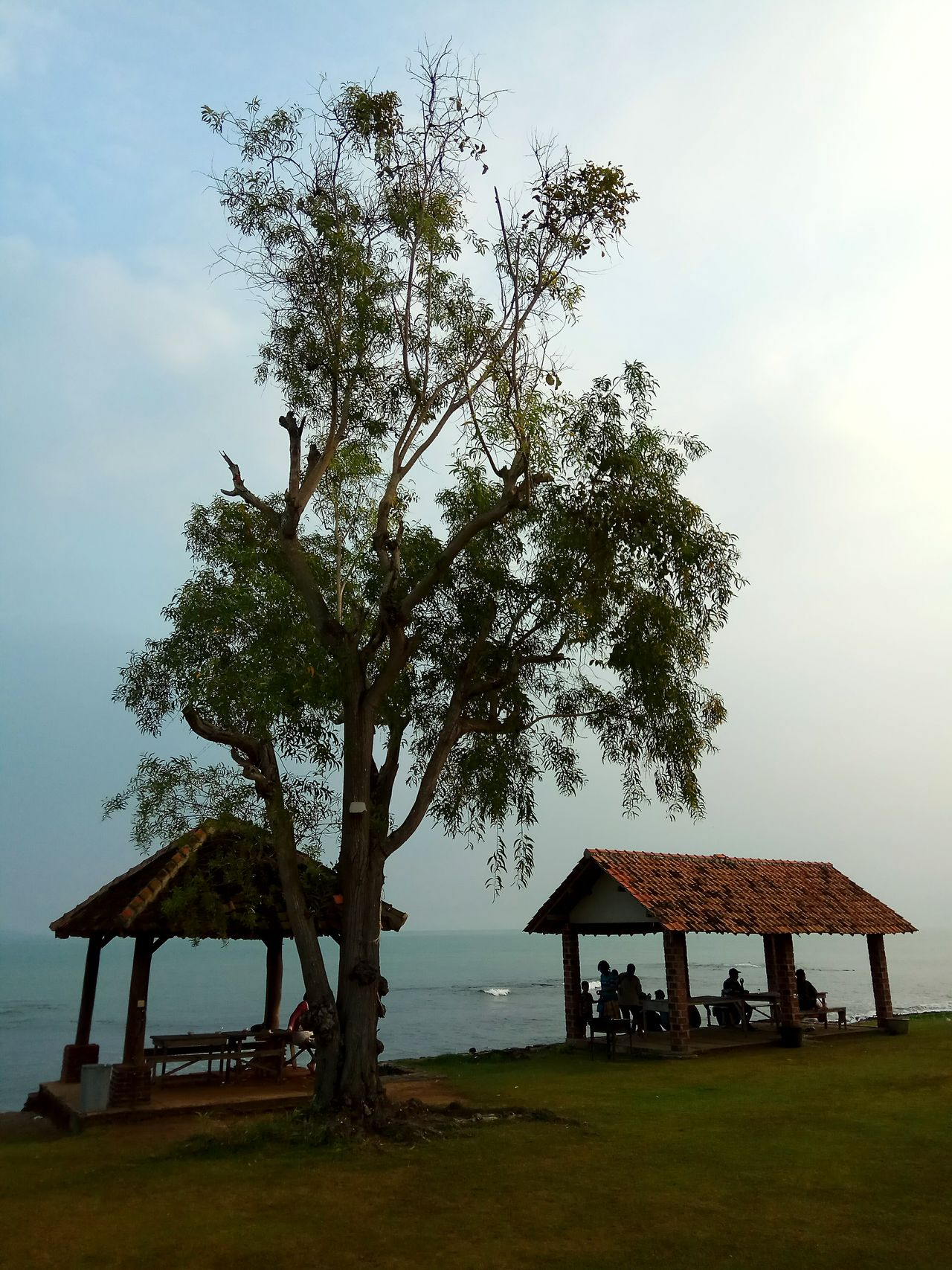 Under the tree Tree Built Structure Outdoors Travel Destinations Landscape Vacations Grass Nature Day Sky Water No People Building Exterior Beauty In Nature Tree Area People Relaxation Pleasure Vacation INDONESIA Travel Sea Water Travel Destination