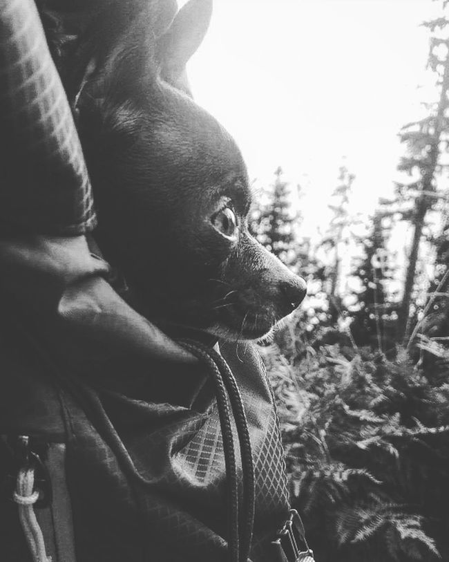 Animals Puppy Love Puppy Dogs Of EyeEm Hiking Pets Outdoors One Animal Animal Themes Animal Head  Domestic Animals Close-up Dog Mammal Pets Curiosity Focus On Foreground Whisker Zoology Looking Livestock No People Animal Nose