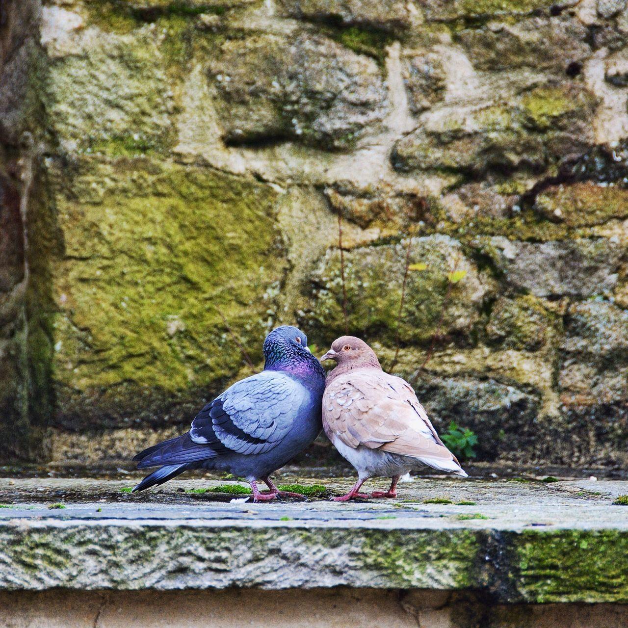 Beautiful stock photos of valentinstag, Animal Themes, Animal Wildlife, Animals In The Wild, Bird