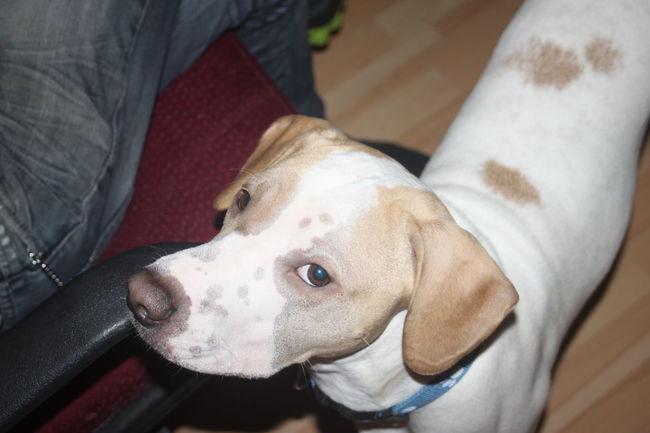 Animal Photography Dog Dog Love Eye Dog Eyes Are Soul Reflection Model Moment Of Silence Smile ✌